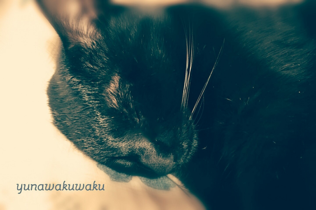 f:id:yunawakuwaku:20170209232132j:plain