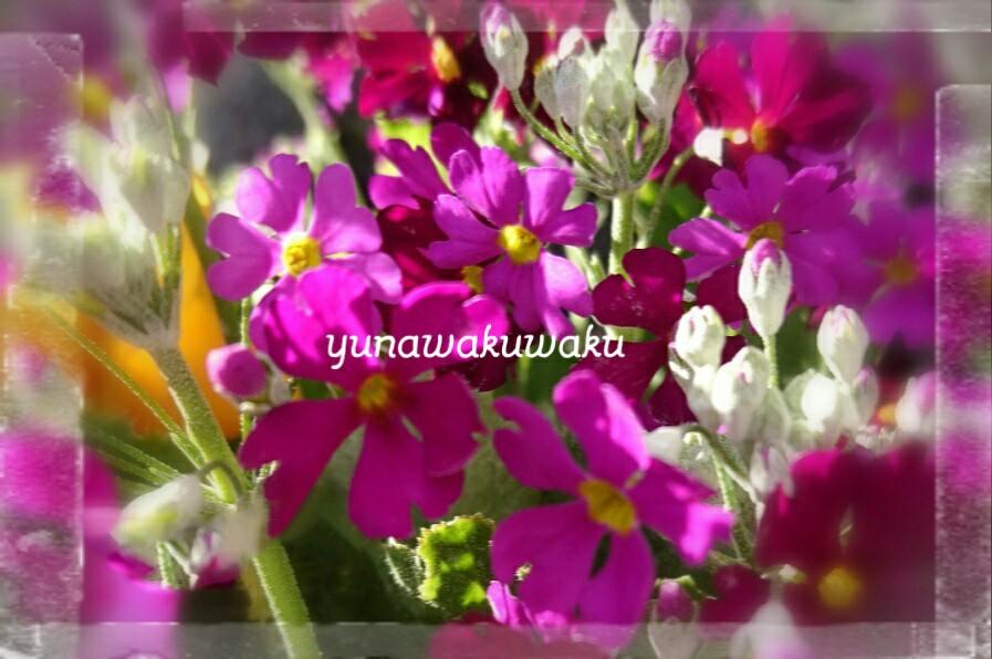 f:id:yunawakuwaku:20170215211651j:plain