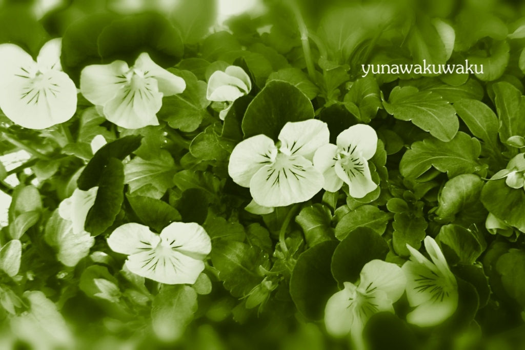 f:id:yunawakuwaku:20170227182416j:plain