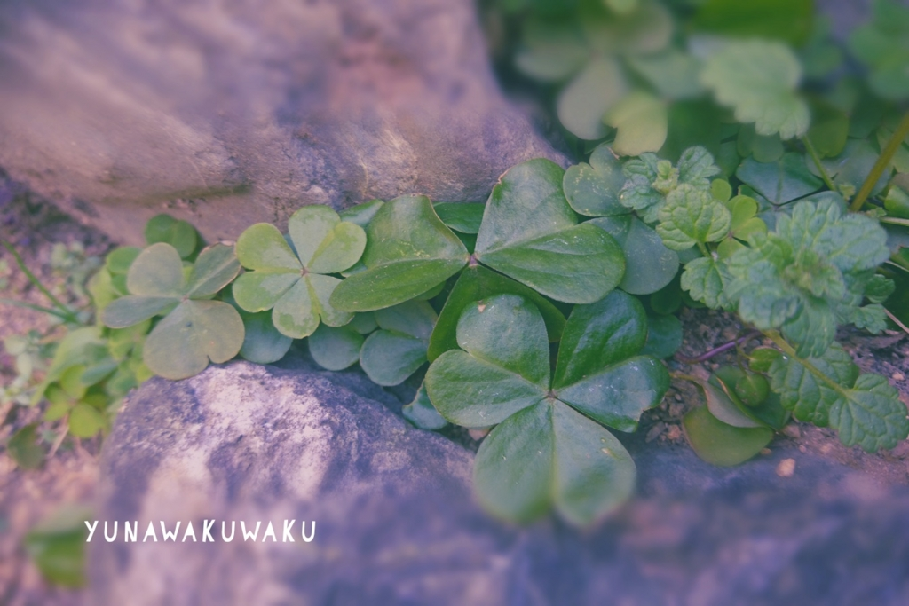 f:id:yunawakuwaku:20170301230240j:plain
