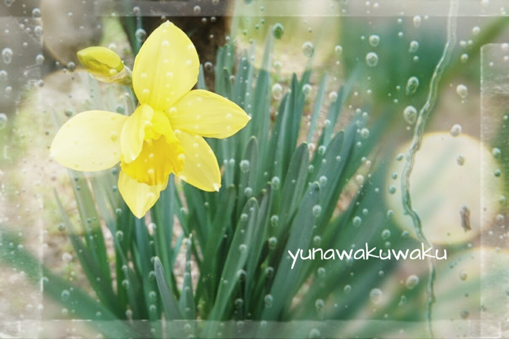f:id:yunawakuwaku:20170308233045j:plain