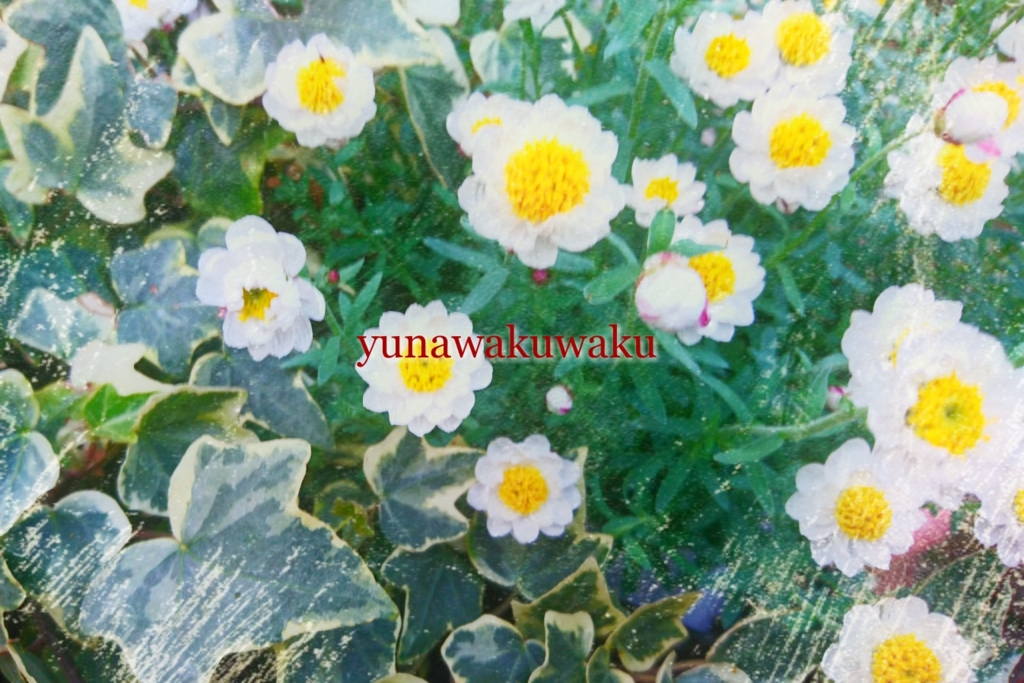 f:id:yunawakuwaku:20170330232724j:plain