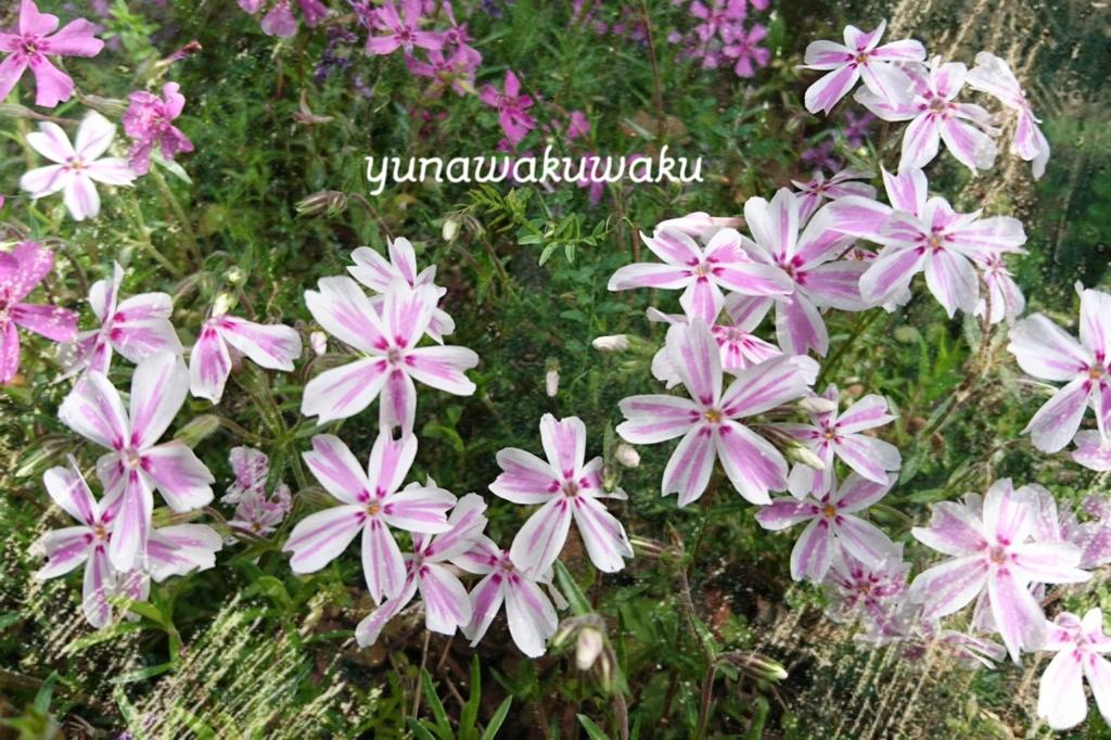 f:id:yunawakuwaku:20170420232146j:plain