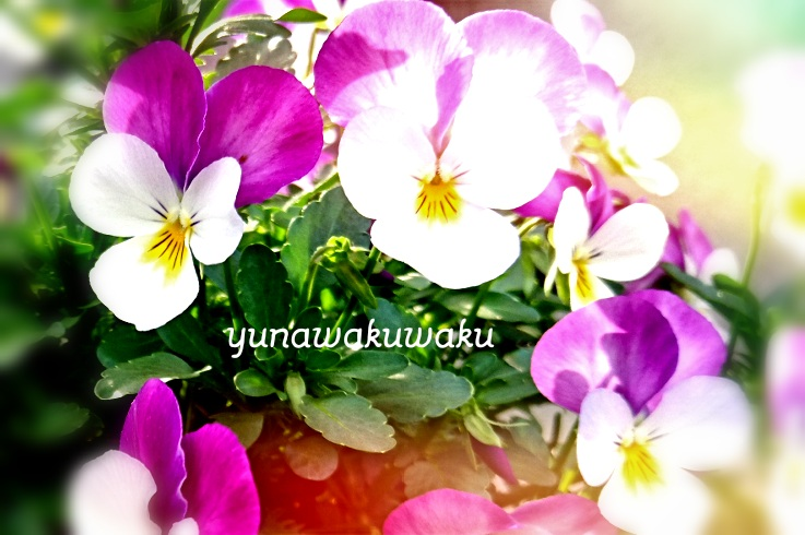 f:id:yunawakuwaku:20170427214814j:plain