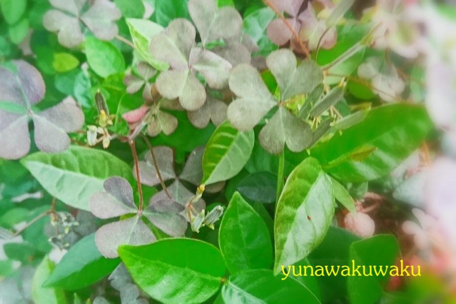 f:id:yunawakuwaku:20170506230057j:plain