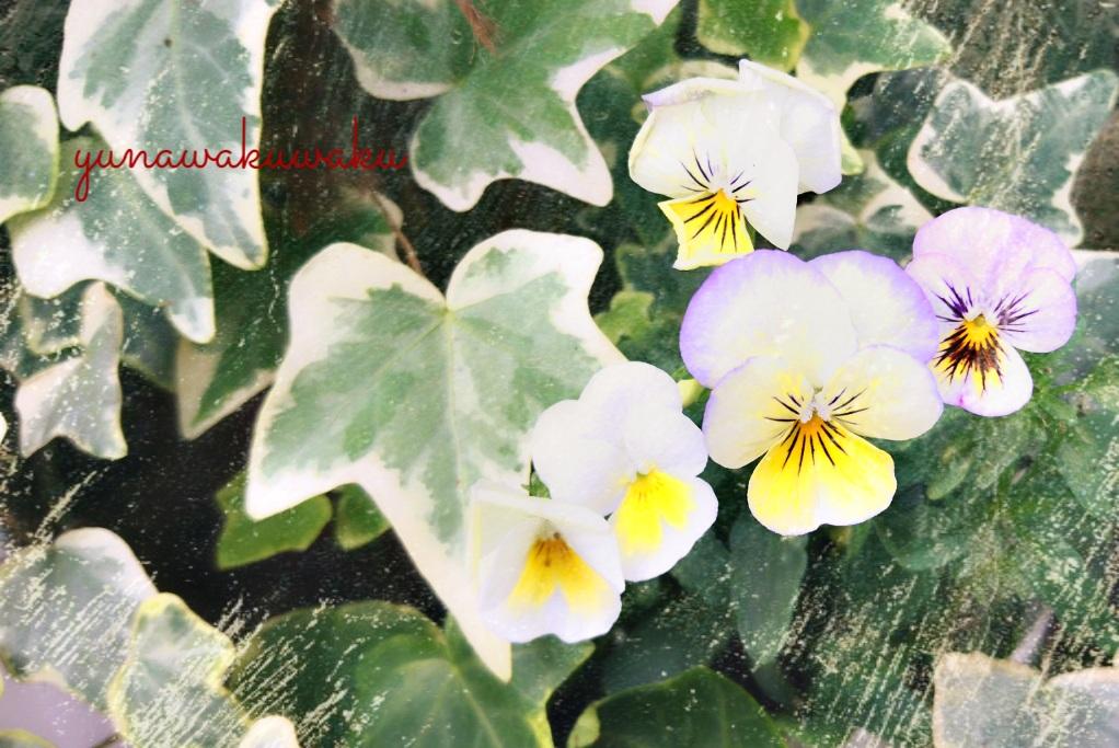f:id:yunawakuwaku:20170514222816j:plain