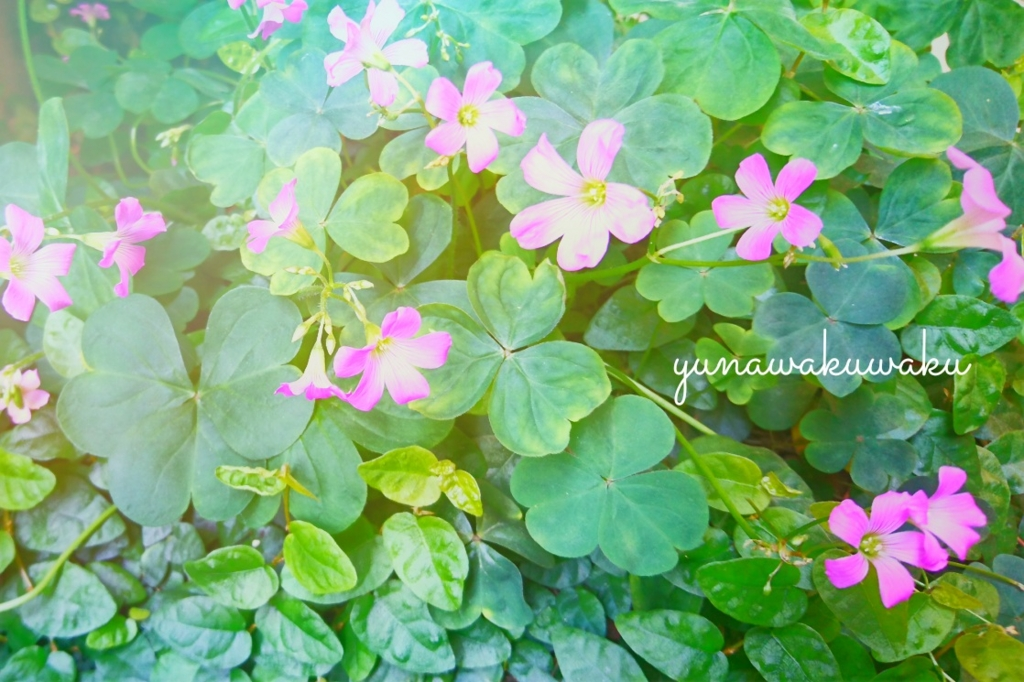 f:id:yunawakuwaku:20170522231924j:plain
