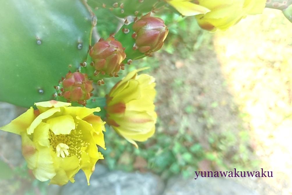 f:id:yunawakuwaku:20170615220351j:plain