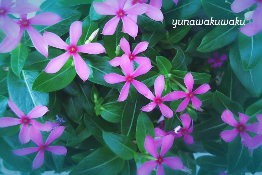 f:id:yunawakuwaku:20170617202146j:plain