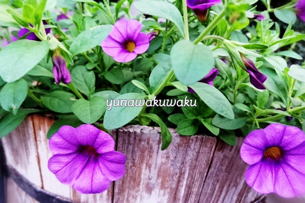 f:id:yunawakuwaku:20170625215133j:plain