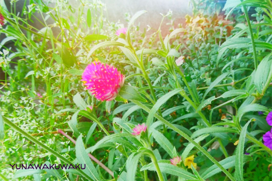 f:id:yunawakuwaku:20170821230337j:plain