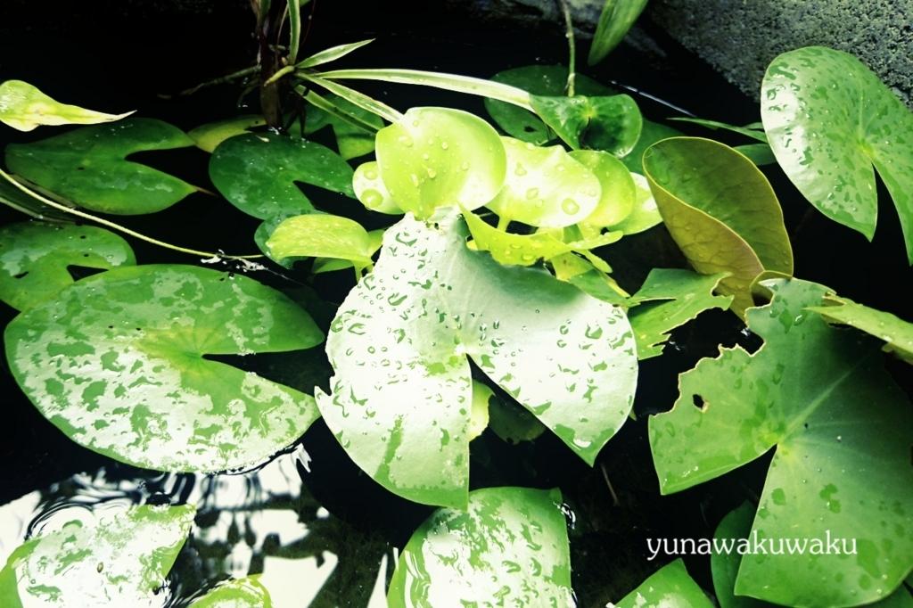 f:id:yunawakuwaku:20170826235217j:plain