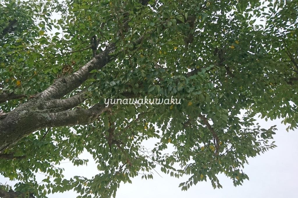 f:id:yunawakuwaku:20171001224747j:plain