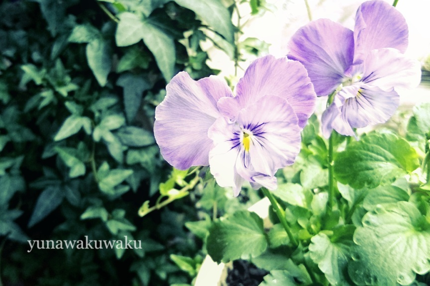 f:id:yunawakuwaku:20171015232447j:plain