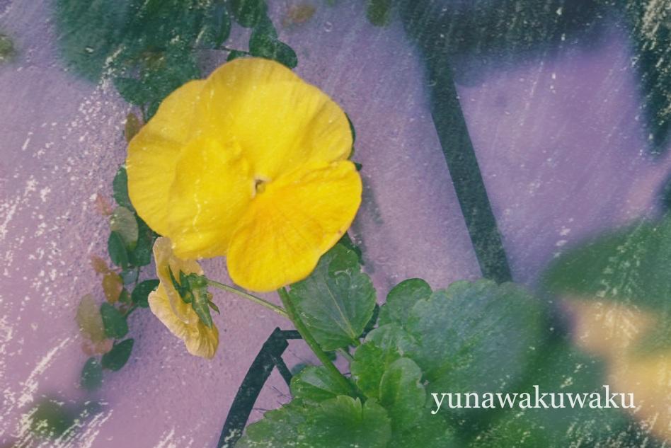 f:id:yunawakuwaku:20171017233809j:plain