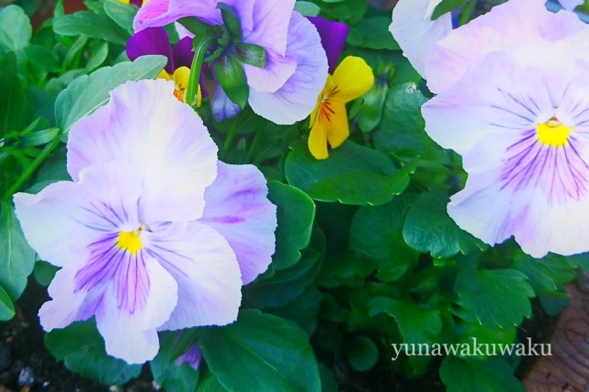 f:id:yunawakuwaku:20171128231213j:plain