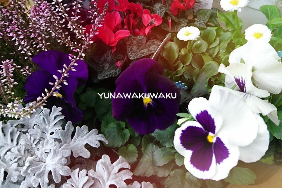 f:id:yunawakuwaku:20171212232721j:plain