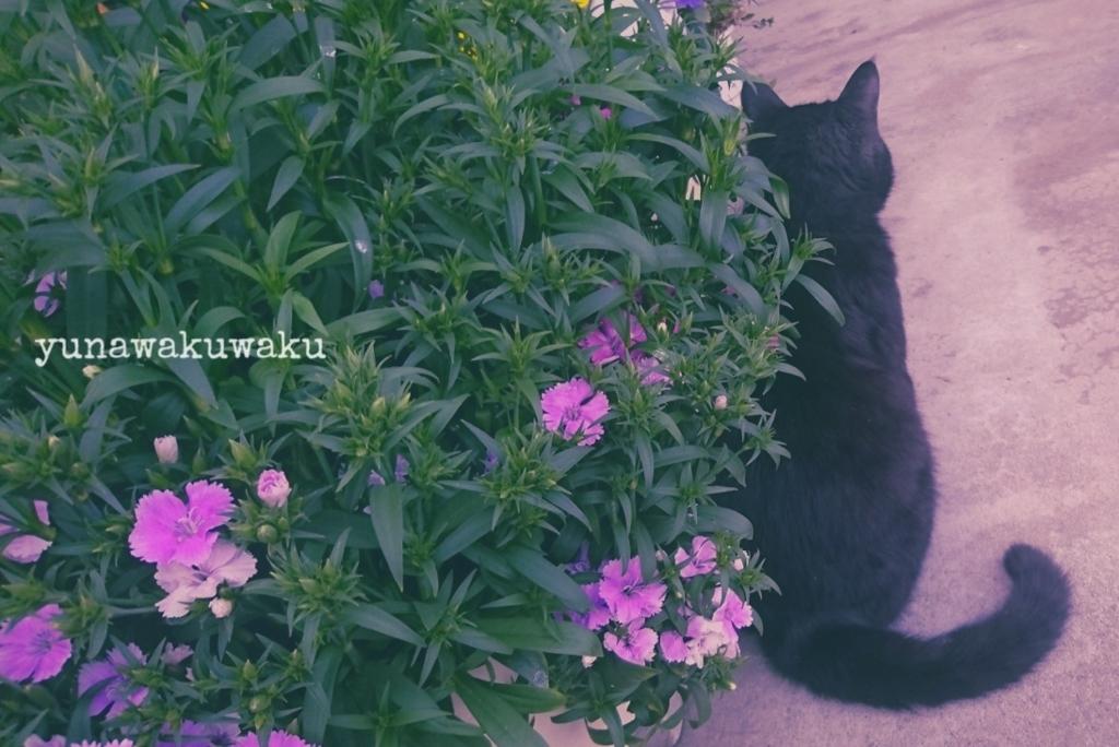 f:id:yunawakuwaku:20180329230607j:plain