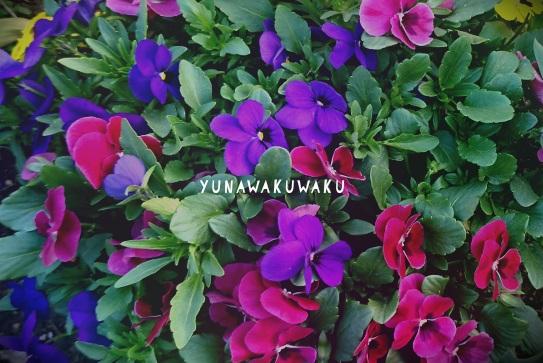 f:id:yunawakuwaku:20180331232717j:plain