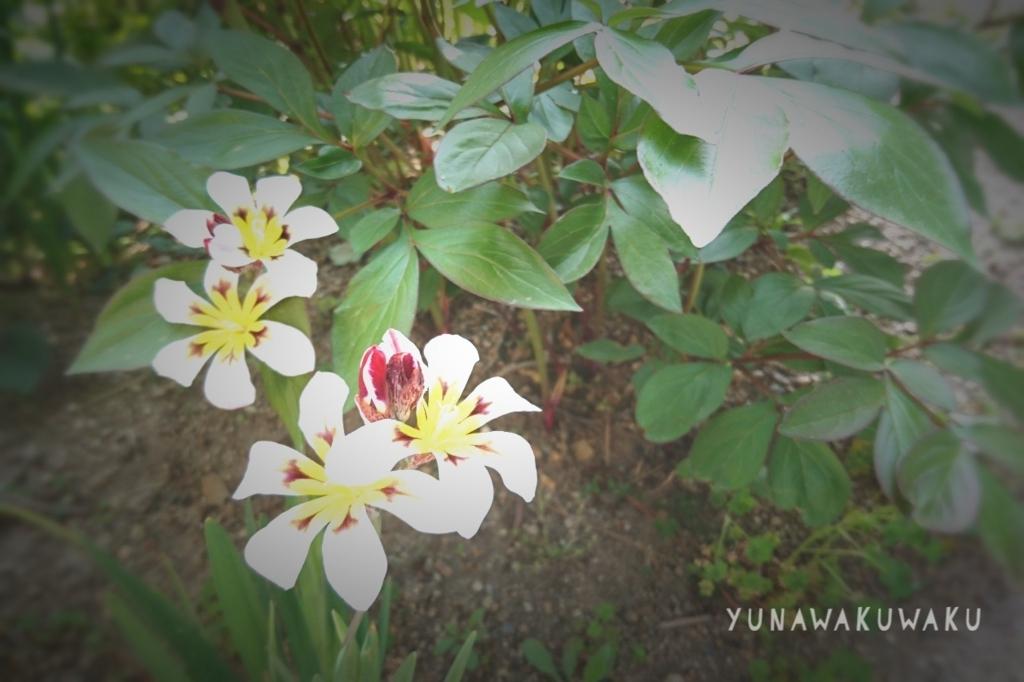 f:id:yunawakuwaku:20180410225759j:plain