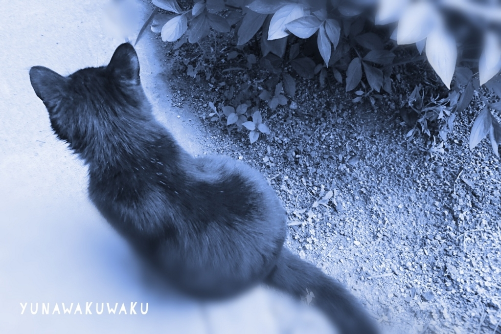 f:id:yunawakuwaku:20180420232234j:plain