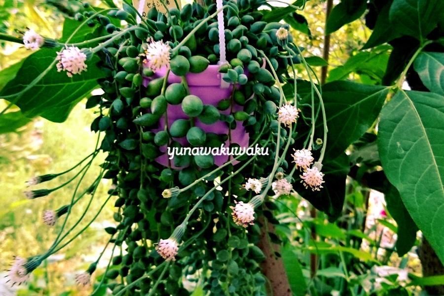 f:id:yunawakuwaku:20180502234054j:plain