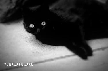 f:id:yunawakuwaku:20180504225136j:plain
