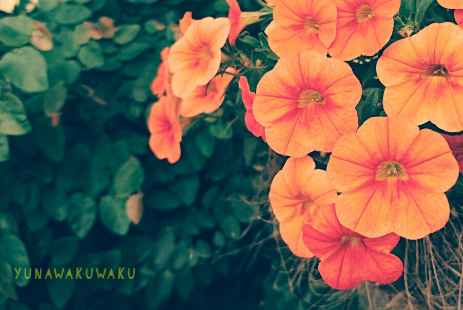f:id:yunawakuwaku:20180516231152j:plain