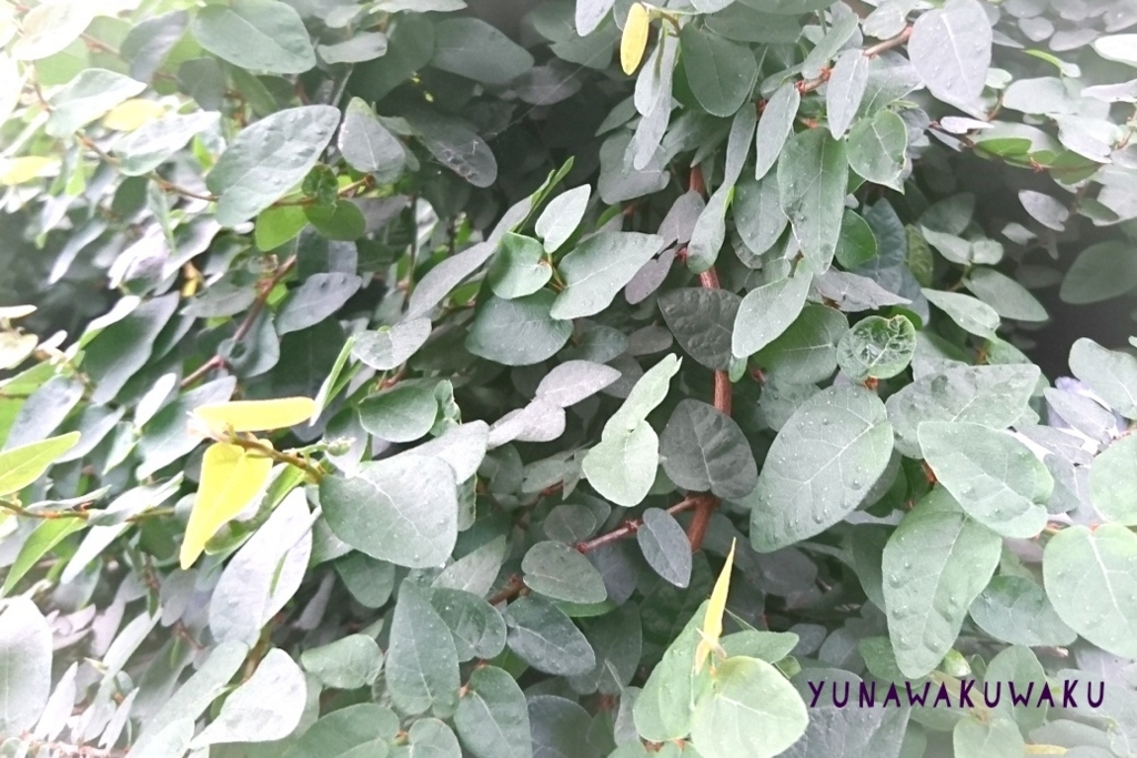 f:id:yunawakuwaku:20180518231515j:plain