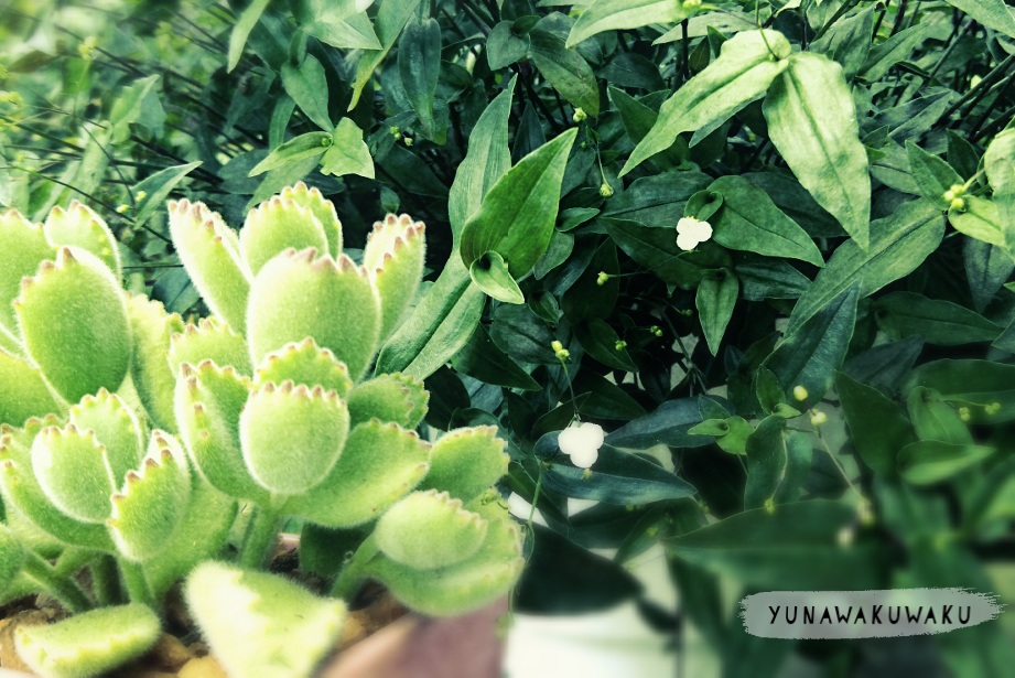 f:id:yunawakuwaku:20180519225649j:plain
