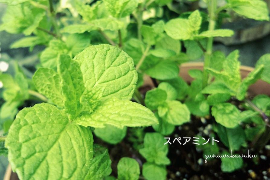 f:id:yunawakuwaku:20180520220953j:plain