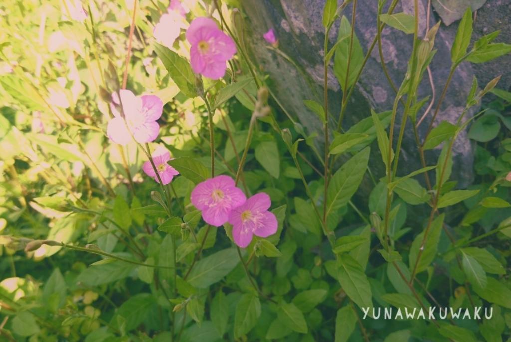 f:id:yunawakuwaku:20180522233035j:plain