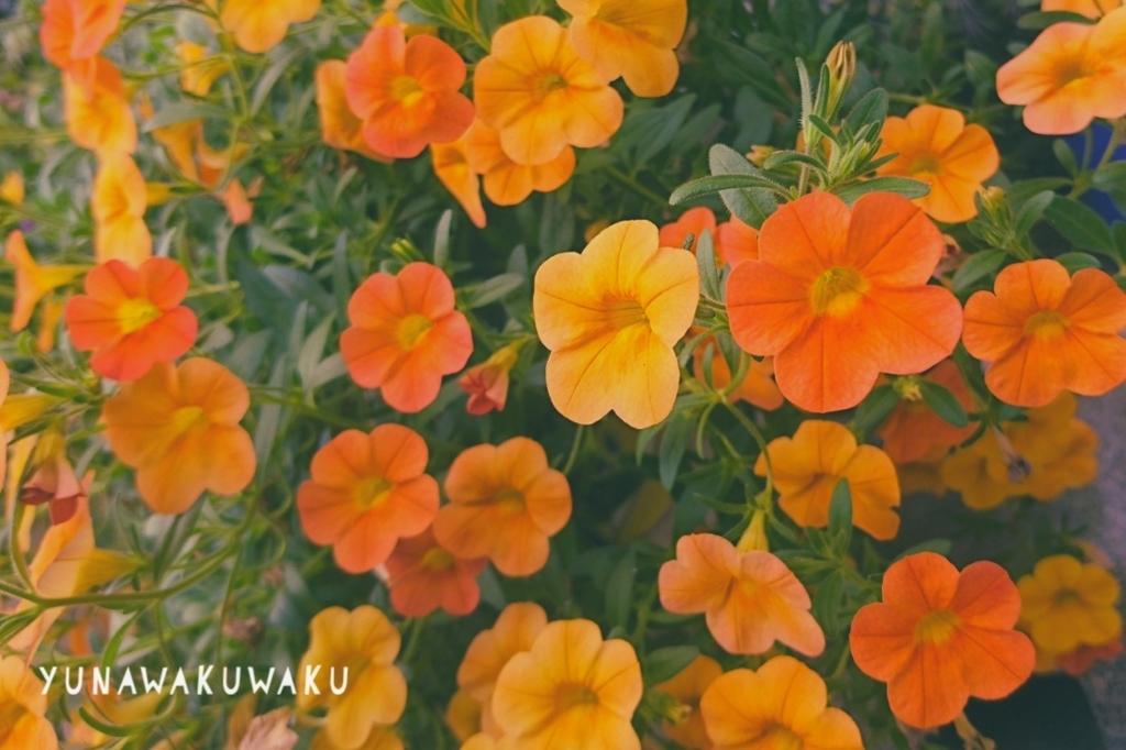 f:id:yunawakuwaku:20180711230756j:plain