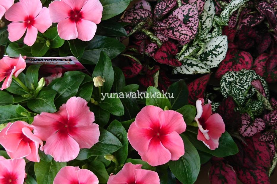 f:id:yunawakuwaku:20180712233325j:plain