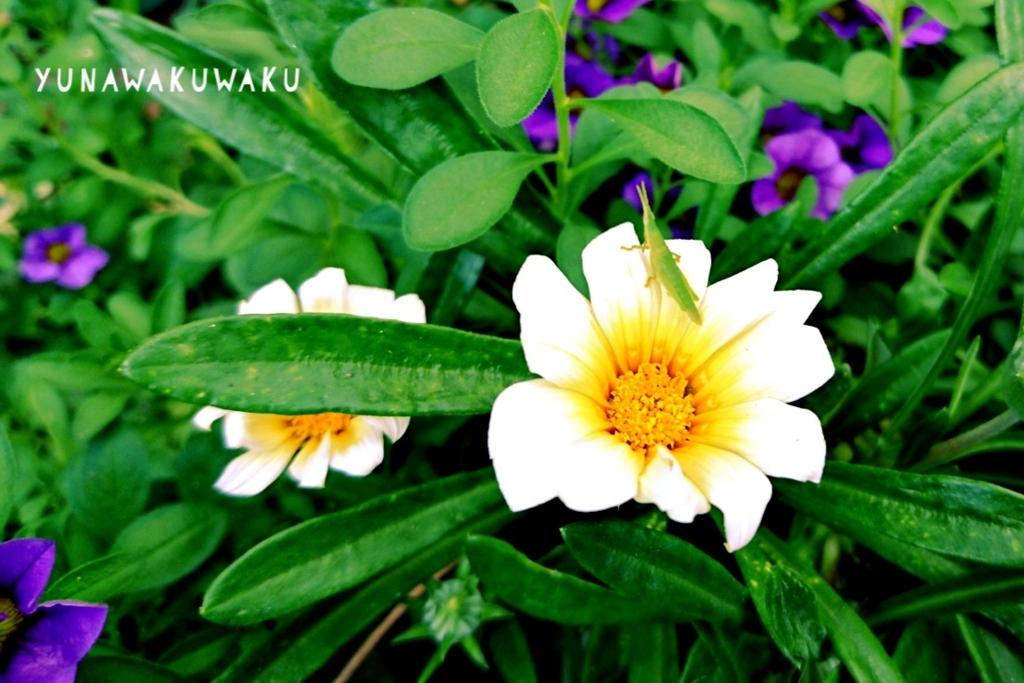 f:id:yunawakuwaku:20180725225540j:plain