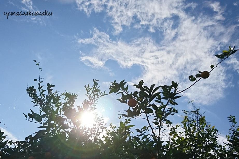 f:id:yunawakuwaku:20181117223423j:plain