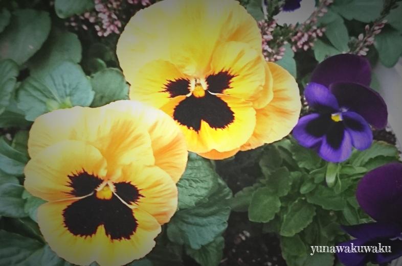 f:id:yunawakuwaku:20181211231751j:plain
