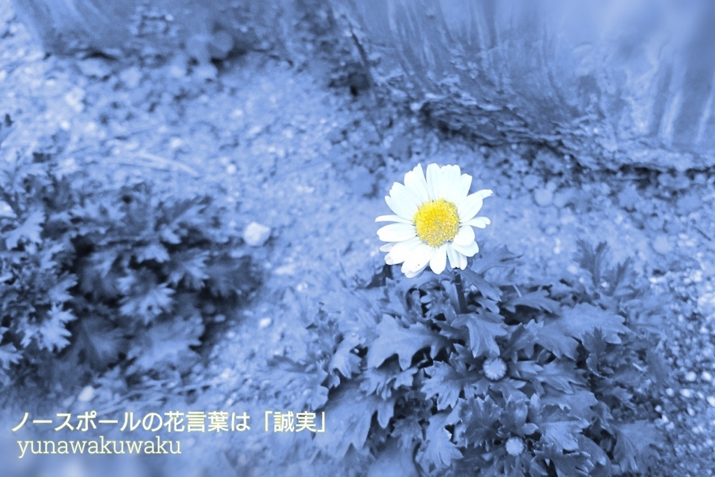f:id:yunawakuwaku:20190107230017j:plain