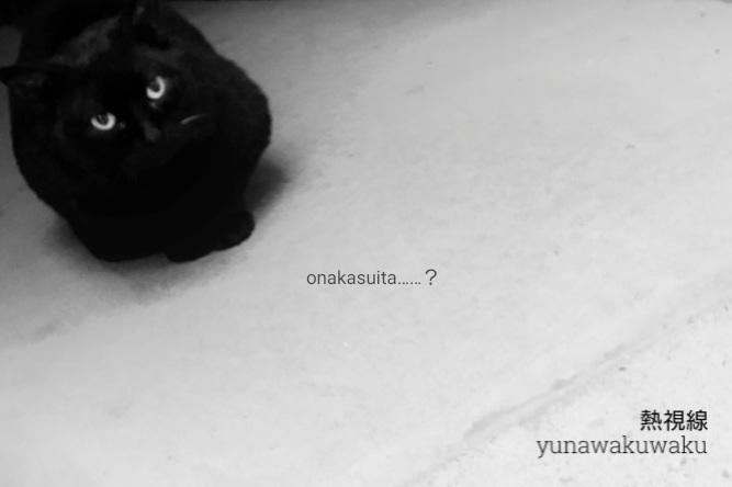 f:id:yunawakuwaku:20190116230012j:plain