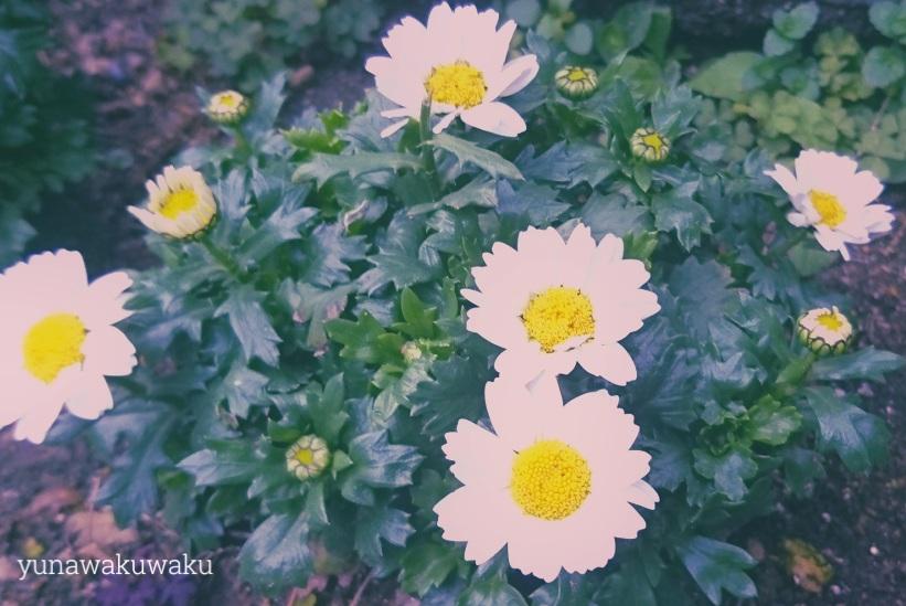 f:id:yunawakuwaku:20190304233609j:plain