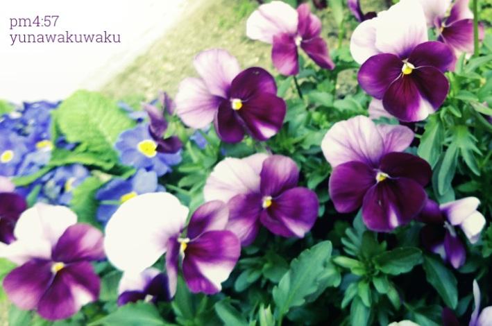 f:id:yunawakuwaku:20190326231954j:plain