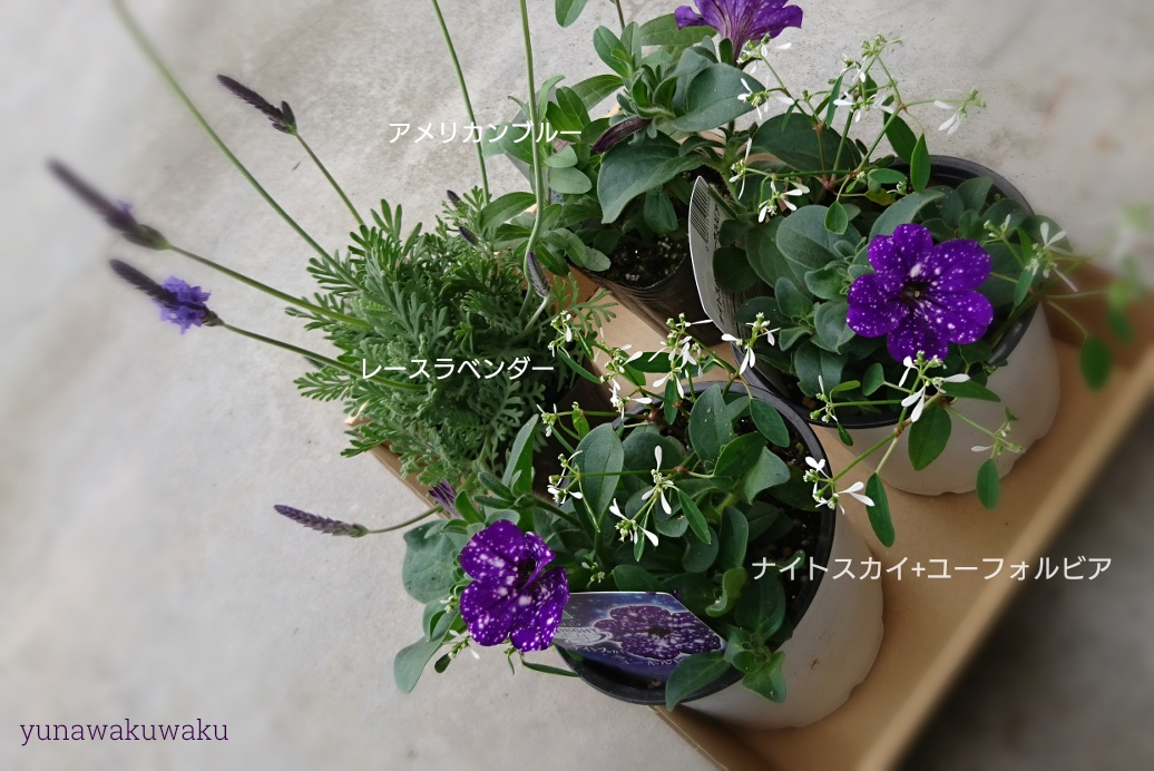f:id:yunawakuwaku:20190417231701j:plain