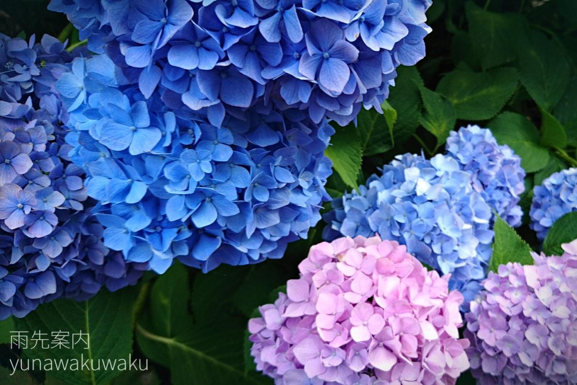 f:id:yunawakuwaku:20190610230431j:plain