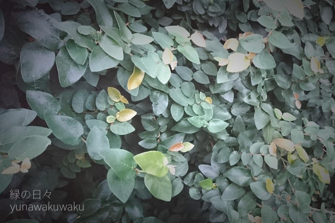 f:id:yunawakuwaku:20190625233757j:plain