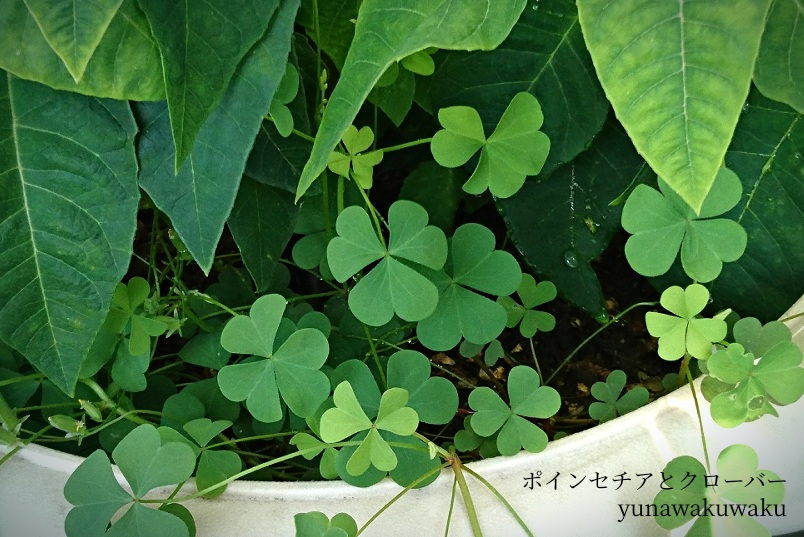 f:id:yunawakuwaku:20190910233007j:plain