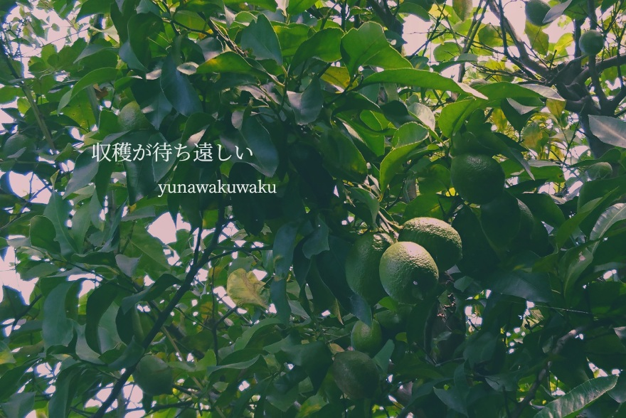 f:id:yunawakuwaku:20190913232103j:plain