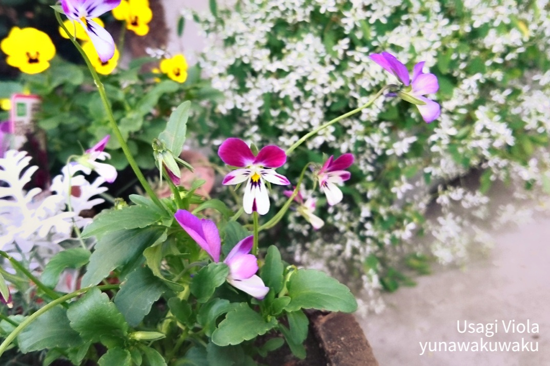 f:id:yunawakuwaku:20191115234620j:plain