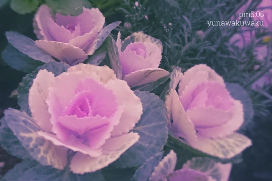 f:id:yunawakuwaku:20191118233210j:plain