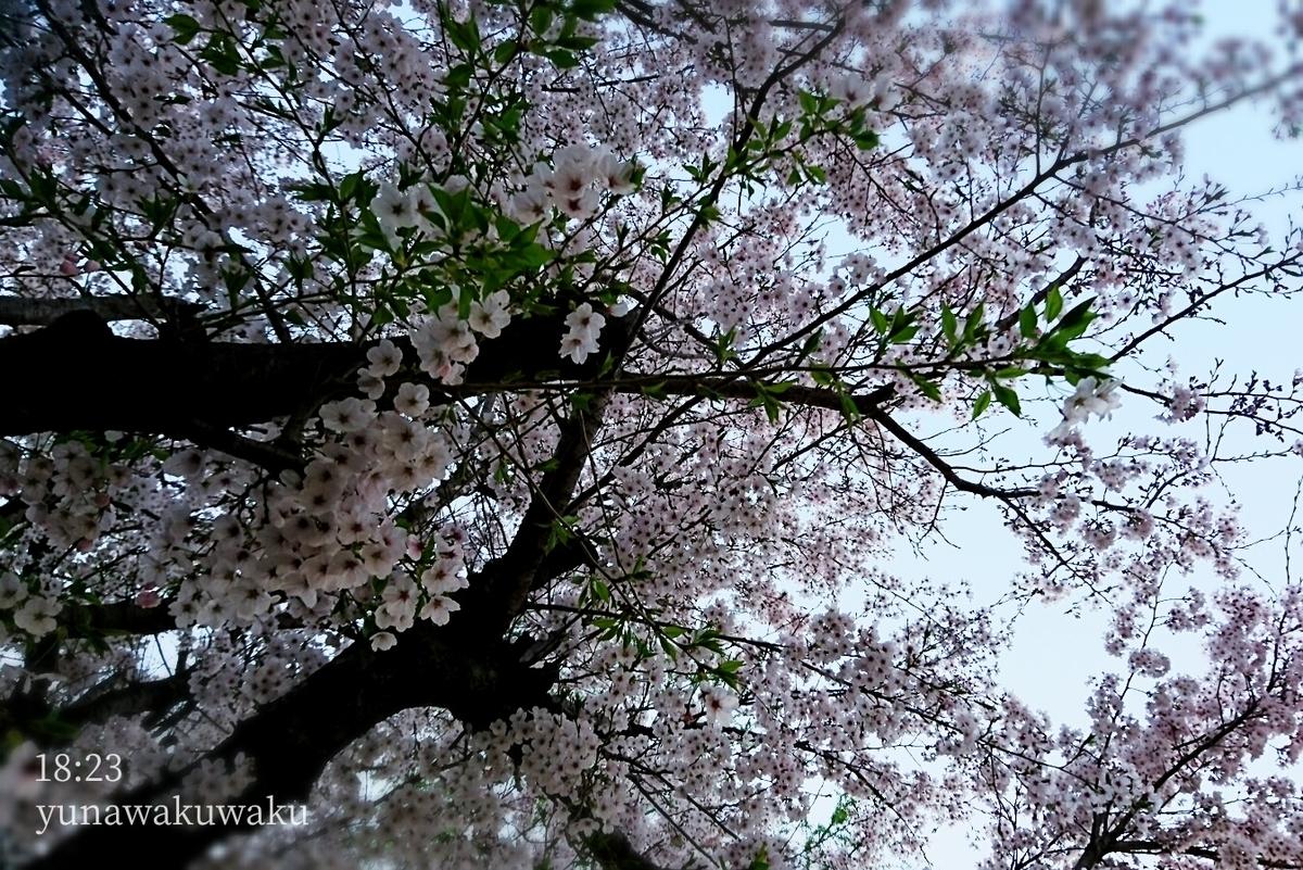 f:id:yunawakuwaku:20200402231040j:plain