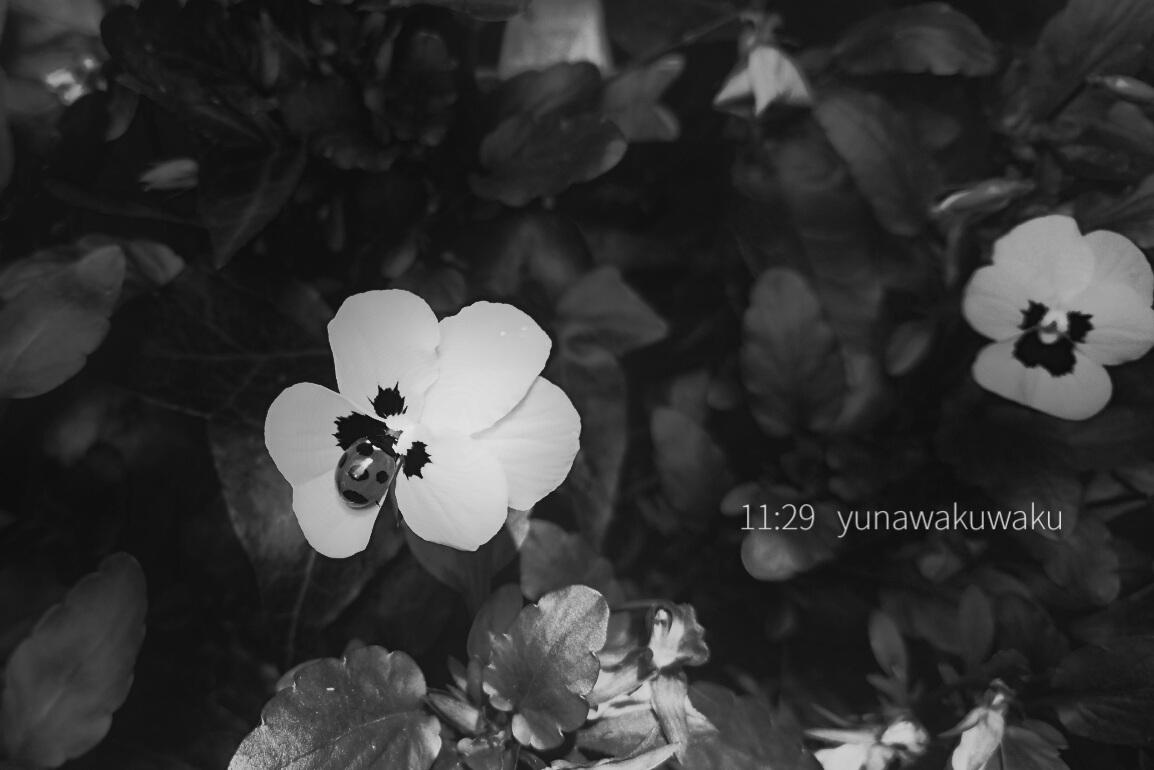 f:id:yunawakuwaku:20200506231859j:plain